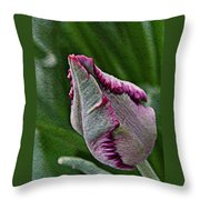 Tightly Wrapped  Throw Pillow