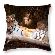 Tigress And Cubs Throw Pillow