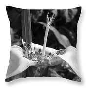 Tigridia Pavonia Or Mexican Shell Flower Throw Pillow