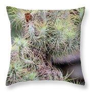 Tillandsia Caput Medusae Throw Pillow
