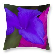 Tillandsia Cyanea Throw Pillow