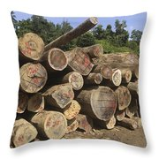 Timber At A Logging Area, Danum Valley Throw Pillow