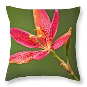 Tiny Beauty Throw Pillow