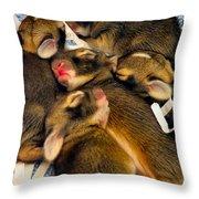 Tiny Bunnies Throw Pillow