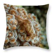 Tiny Cryptic Brown And Grey Shrimp Throw Pillow