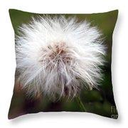Tiny Dandelion Closeup Throw Pillow
