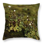 Tiny Flowering Plant Grows In Moss Throw Pillow