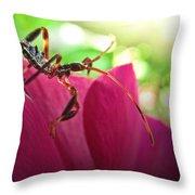 Tiny Leaf Hopper  Throw Pillow