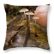 Tiny Microhylid Frog Papua New Guinea Throw Pillow