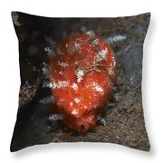 Tiny Red Yellow And White Cowrie Throw Pillow