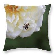 Tiny Spider  Throw Pillow