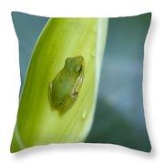 Tiny Tree Frog Cradle Throw Pillow
