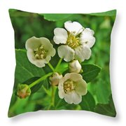 Tiny White Flowers Of A Bush Throw Pillow