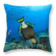 Titan Triggerfish Picking At Coral Throw Pillow