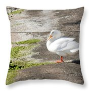 to swim or not to swim - A beautiful white duck ready to get into the sea or not Throw Pillow