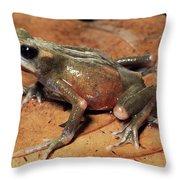 Toad Atelopus Senex On A Leaf Throw Pillow
