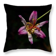 Toad Lilly 2 Throw Pillow