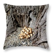 Toadstools In The Gravel Throw Pillow by Will Borden