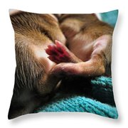 Toesies Throw Pillow