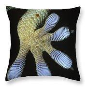 Tokay Gecko Gecko Gecko Underside Throw Pillow
