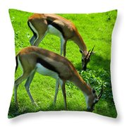 Tommies Throw Pillow
