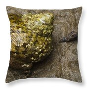 Top Shell Clanculus Sp Throw Pillow