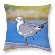 Topsail Seagull Throw Pillow by Betsy Knapp