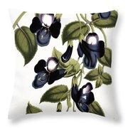 Torenia Asiatica Pulcherrima Throw Pillow