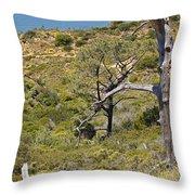 Torry Pines Sentinal Throw Pillow