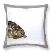 Tortoise Love Throw Pillow