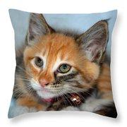 Tortoiseshell Kitten Throw Pillow
