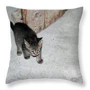 Tough Barn Kitten Throw Pillow