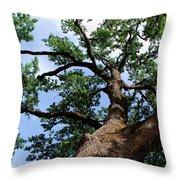 Towering Oak In Summer Throw Pillow