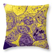 Toxoplasma Cyst Tem Throw Pillow