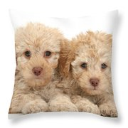 Toy Labradoodle Puppies Throw Pillow