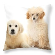 Toy Poodle And Golden Retriever Throw Pillow