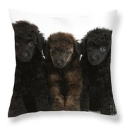 Toy Poodle Pups Throw Pillow