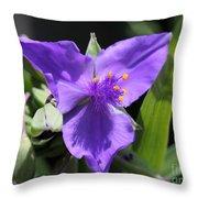 Tradescantia Named Andersonia Mauve Throw Pillow