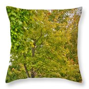 Transition Of Autumn Color Throw Pillow