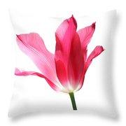 Translucent Pink Tulip Flower  Throw Pillow