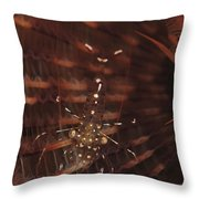 Transparent Shrimp On A Brown Feather Throw Pillow
