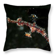 Transparent White And Red Harlequin Throw Pillow