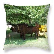 Transportation. Colonial Williamsburg. Virginia Throw Pillow