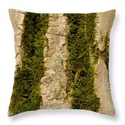 Tree Bark Mossy 4 C Throw Pillow
