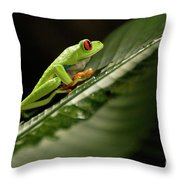 Tree Frog 2 Throw Pillow