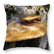 Tree Fungus 1 Throw Pillow