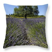 Tree In A Field Of Lavender. Provence Throw Pillow