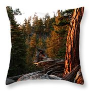 Tree Reflections Throw Pillow