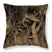 Tree Root's In The Creek Bed Throw Pillow