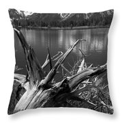 Tree Stump On The Shore Of Lewis Lake At Yellowstone Throw Pillow